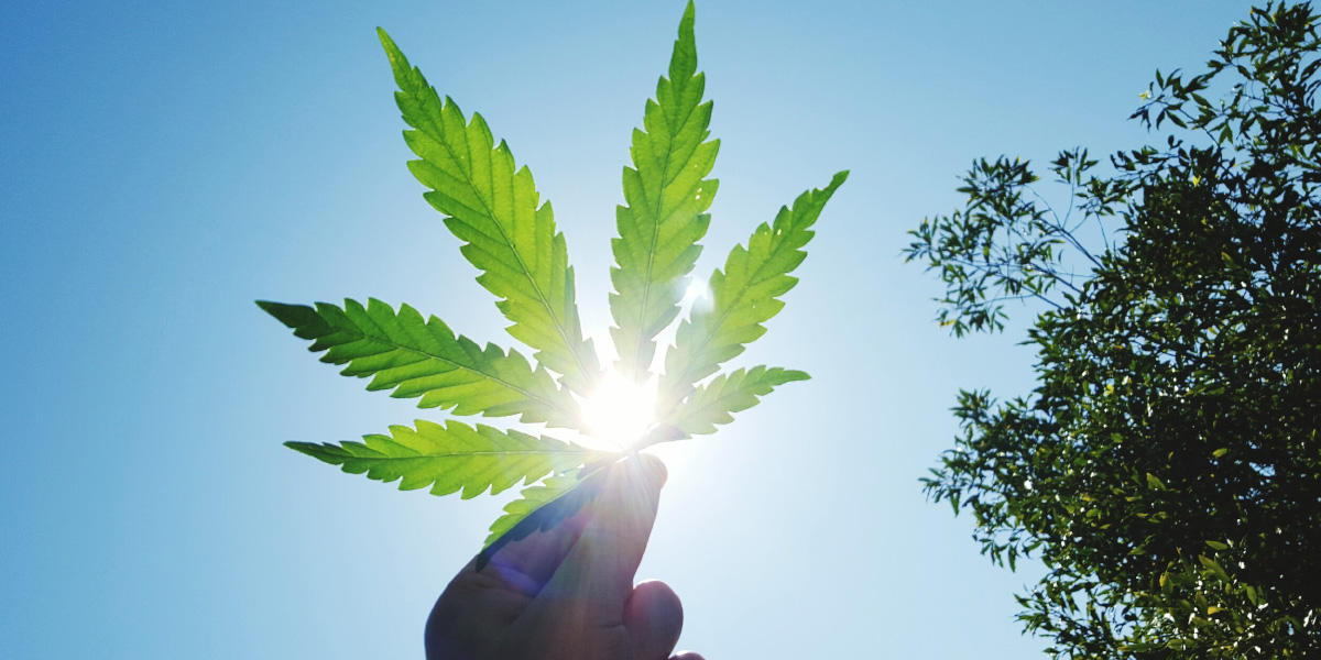 MFS insights: will the cannabis story go up in smoke?